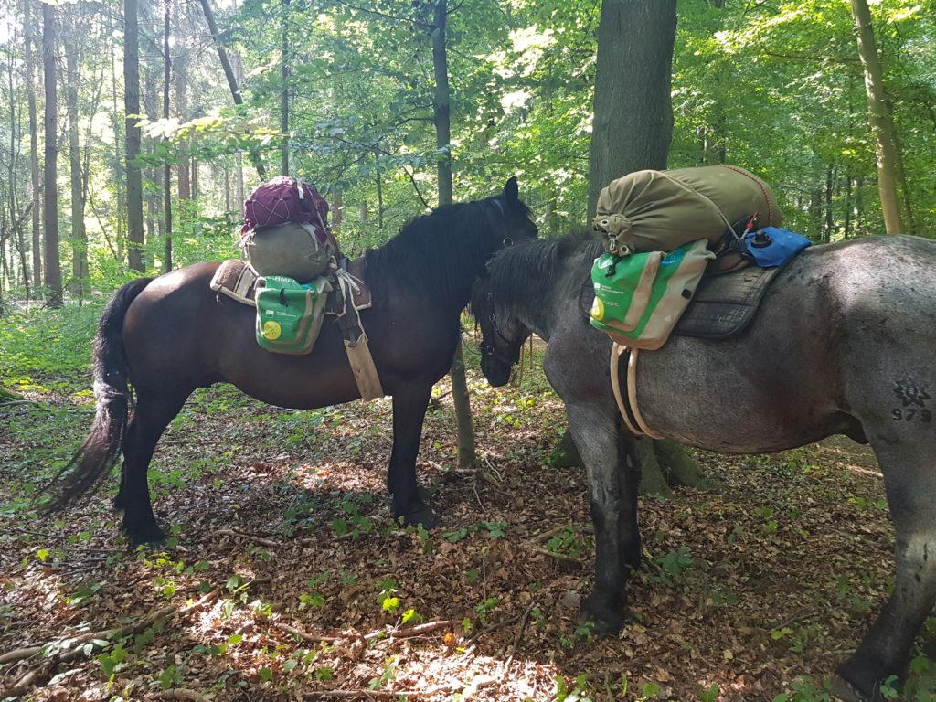 Vulkan und Kliwia, Pferde von MUT-WANDERN